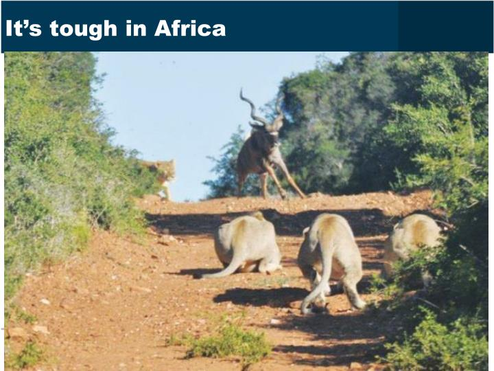 It's tough in Africa
