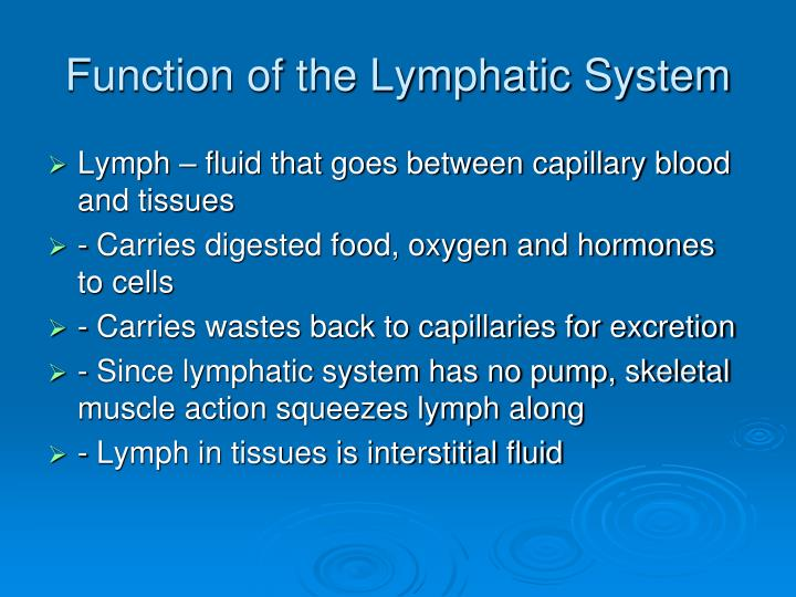 Function of the Lymphatic System