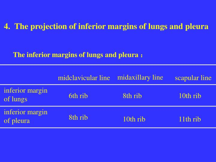 4.  The projection of inferior margins of lungs and pleura