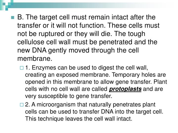 B. The target cell must remain intact after the transfer or it will not function. These cells must not be ruptured or they will die. The tough cellulose cell wall must be penetrated and the new DNA gently moved through the cell membrane.