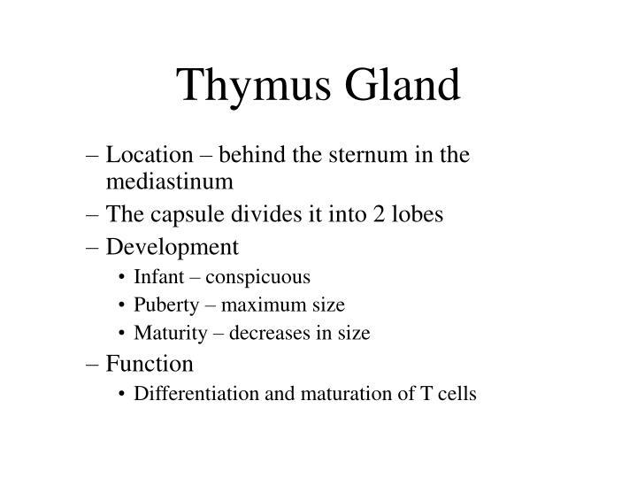 Thymus Gland