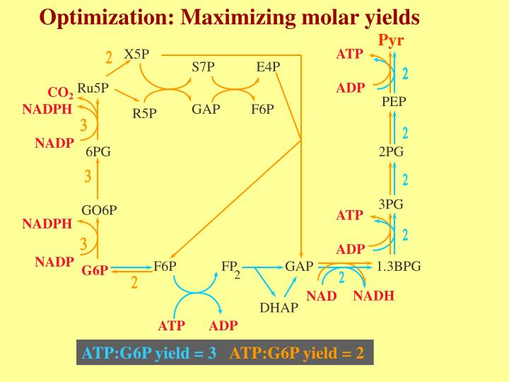Optimization: Maximizing molar yields