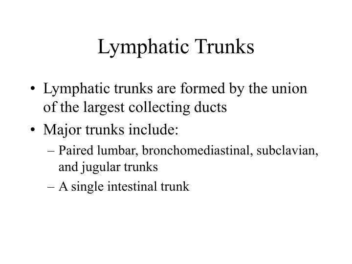 Lymphatic Trunks