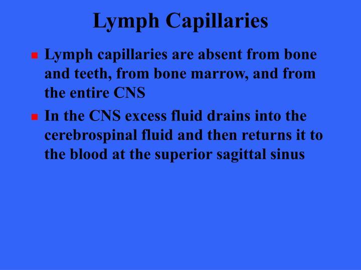 Lymph Capillaries