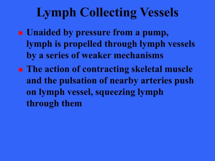 Lymph Collecting Vessels