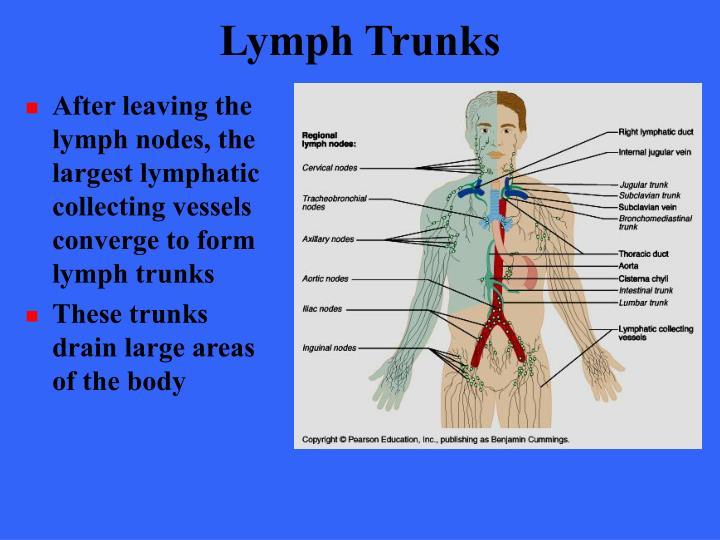Lymph Trunks