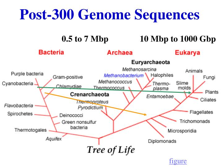 Post-300 Genome Sequences