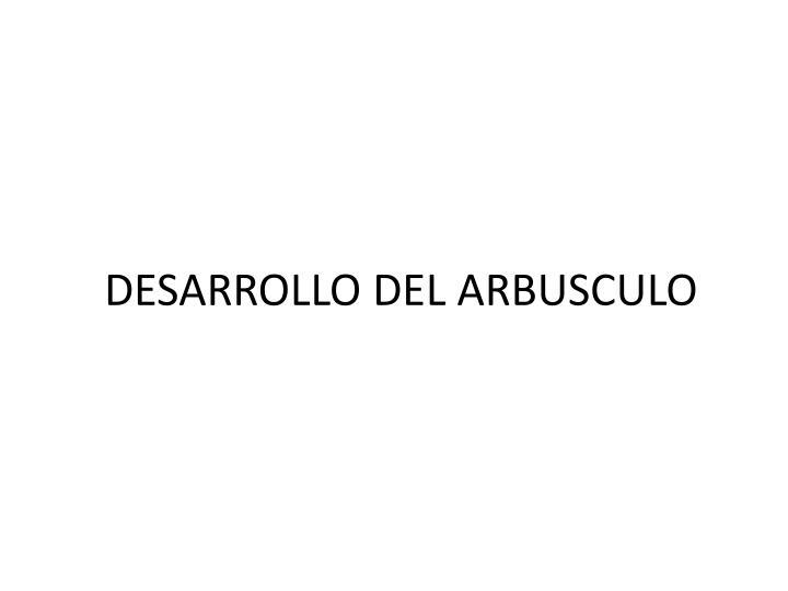 DESARROLLO DEL ARBUSCULO