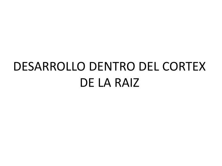 DESARROLLO DENTRO DEL CORTEX DE LA RAIZ