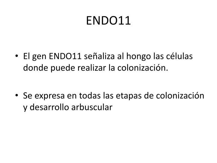 ENDO11