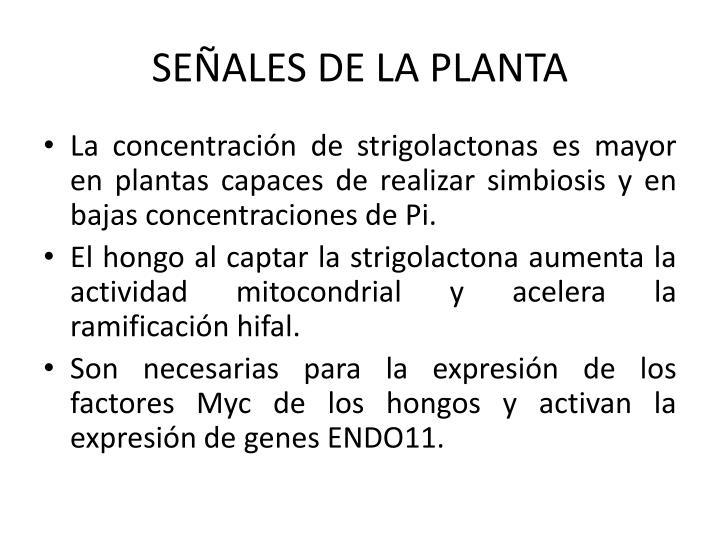 SEÑALES DE LA PLANTA