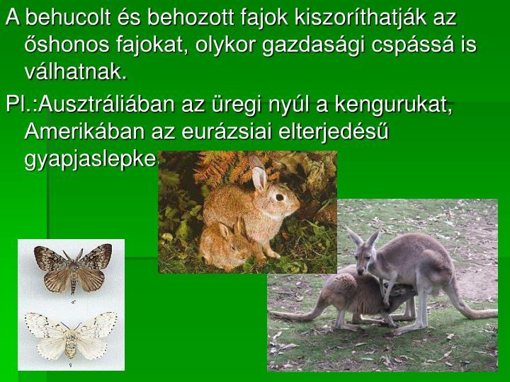 A behucolt és behozott fajok kiszoríthatják az őshonos fajokat, olykor gazdasági cspássá is válhatnak.