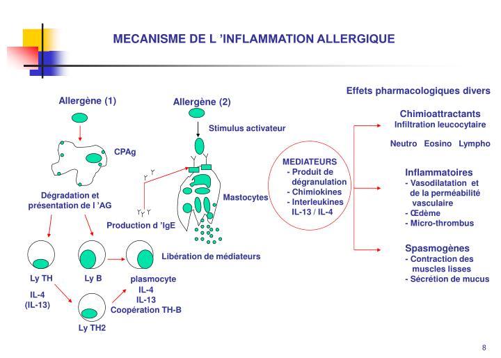 MECANISME DE L'INFLAMMATION ALLERGIQUE