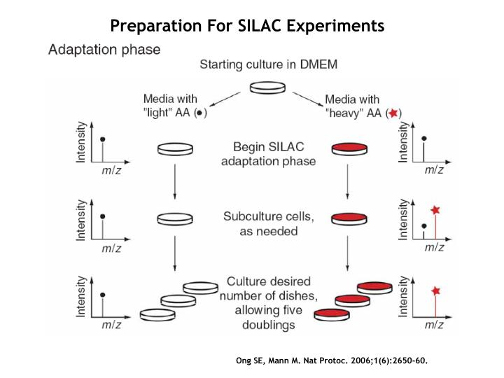 Preparation For SILAC Experiments