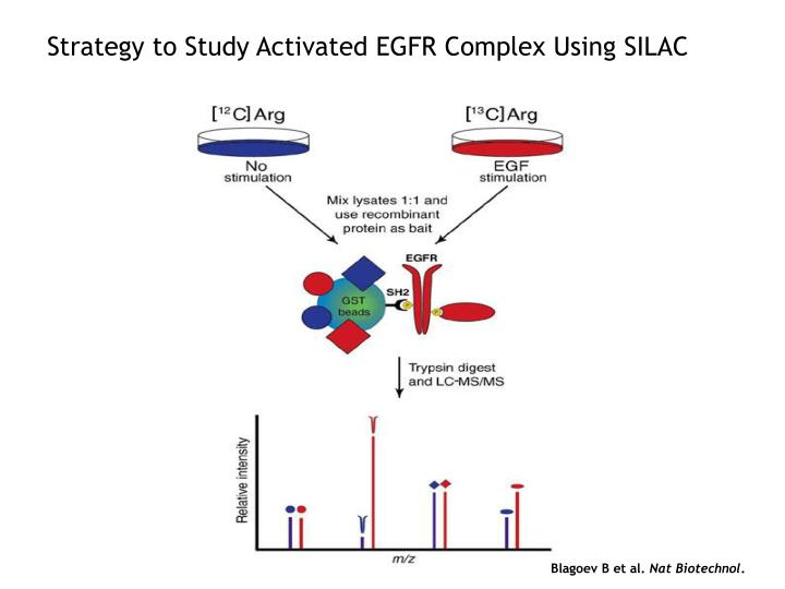 Strategy to Study Activated EGFR Complex Using SILAC