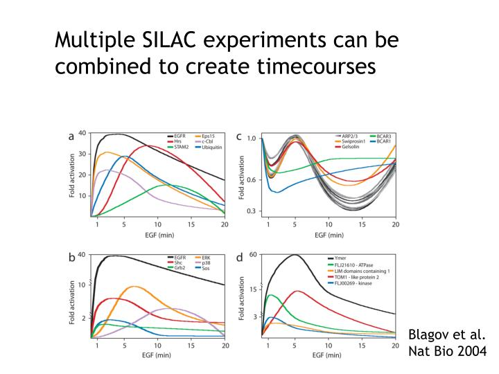 Multiple SILAC experiments can be combined to create timecourses