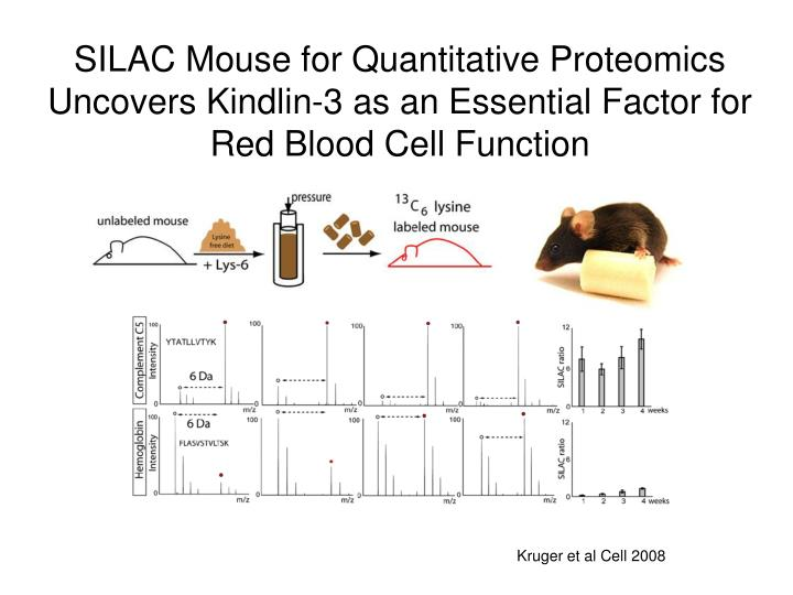 SILAC Mouse for Quantitative Proteomics Uncovers Kindlin-3 as an Essential Factor for Red Blood Cell Function