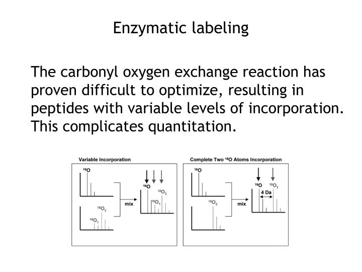 Enzymatic labeling