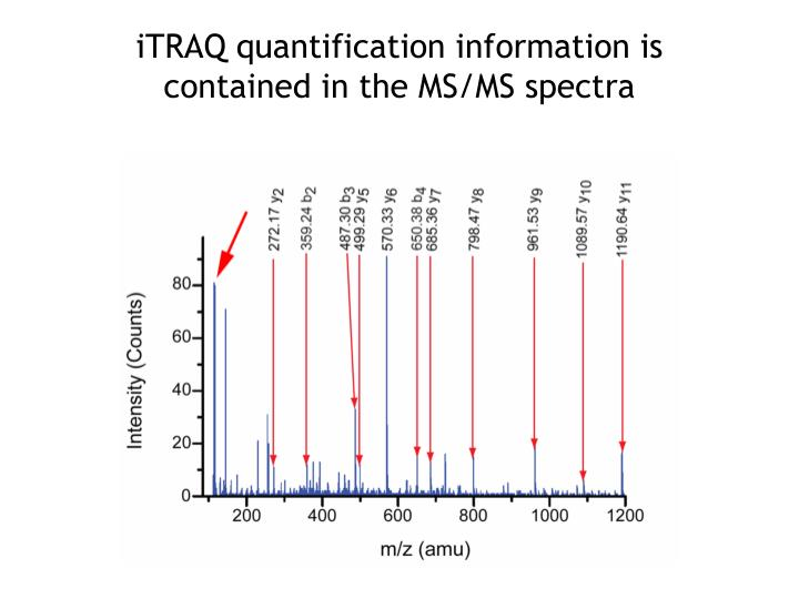 iTRAQ quantification information is contained in the MS/MS spectra