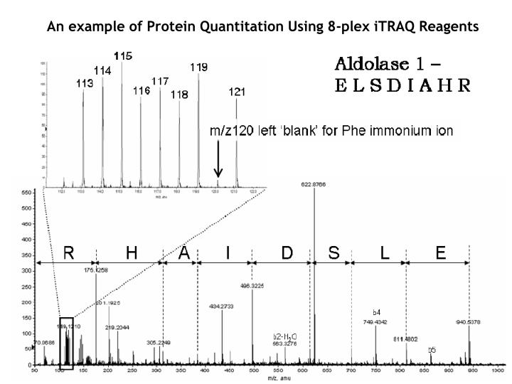An example of Protein Quantitation Using 8-plex iTRAQ Reagents