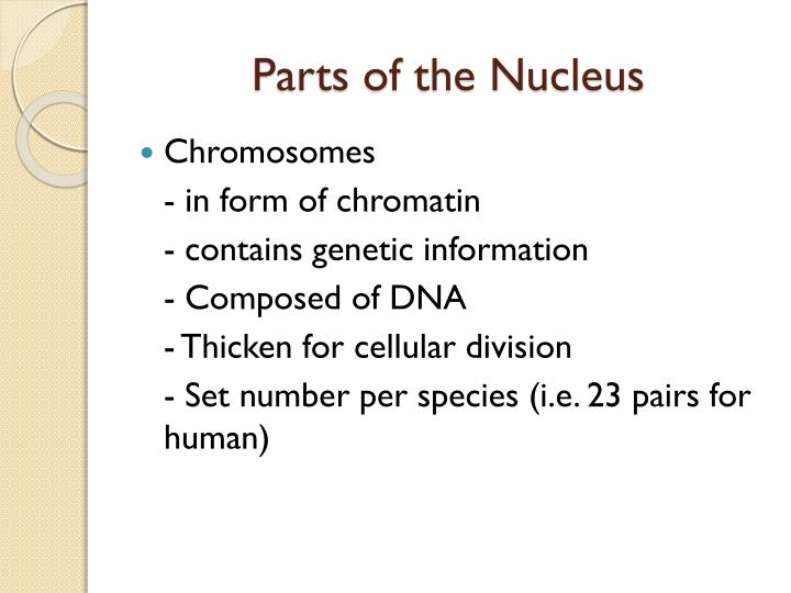 Parts of the Nucleus