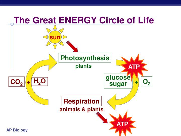 The Great ENERGY Circle of Life