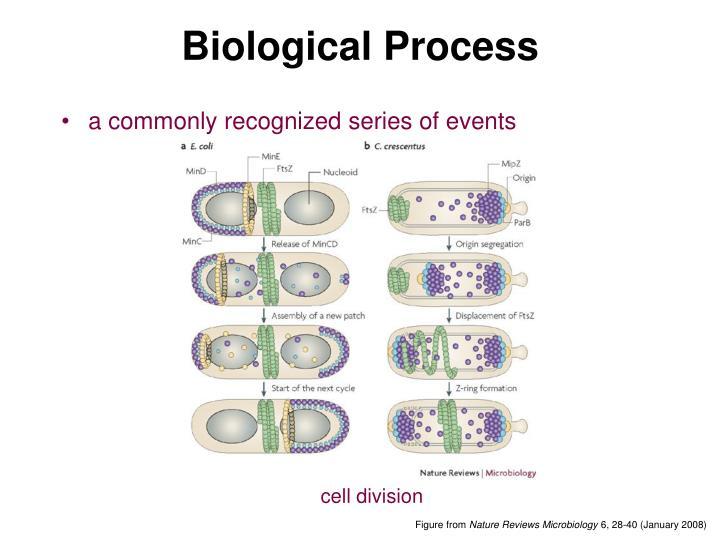 Biological Process