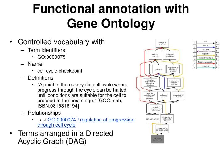 Functional annotation with Gene Ontology