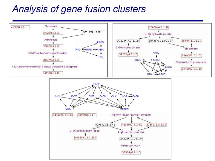 Analysis of gene fusion clusters