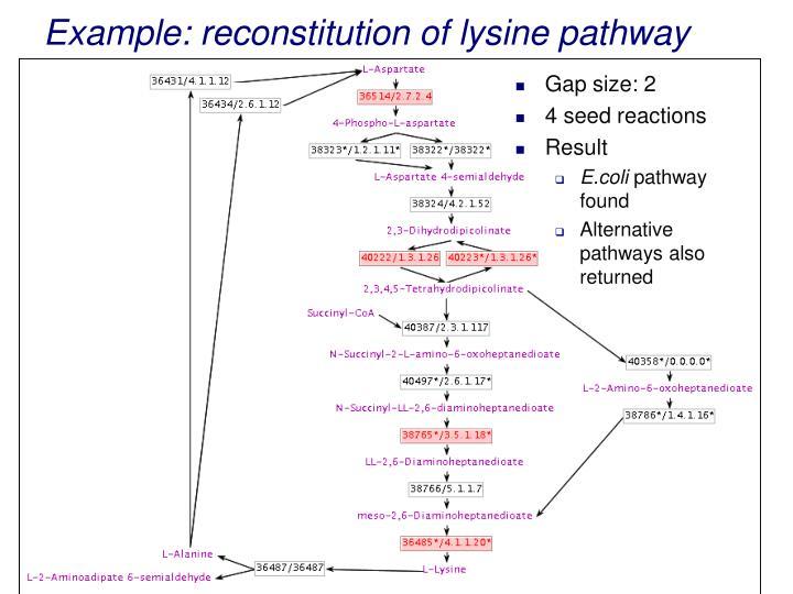 Example: reconstitution of lysine pathway