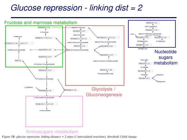 Fructose and mannose metabolism