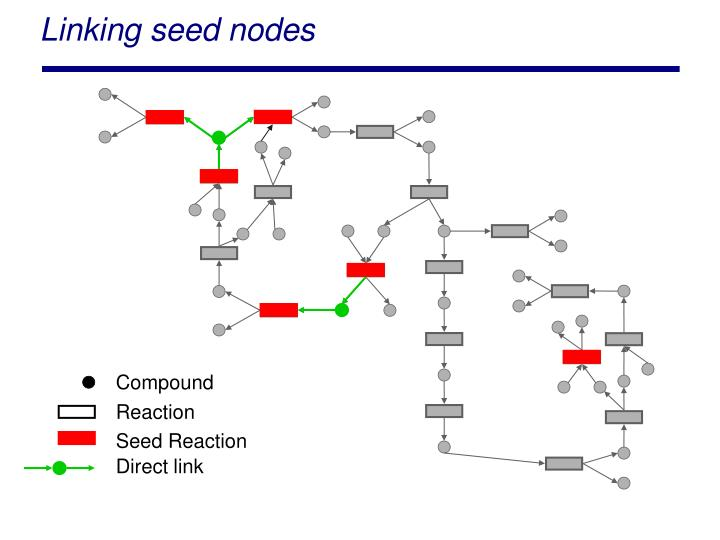 Linking seed nodes