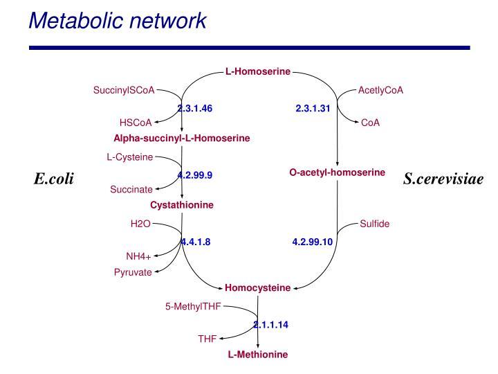 Metabolic network