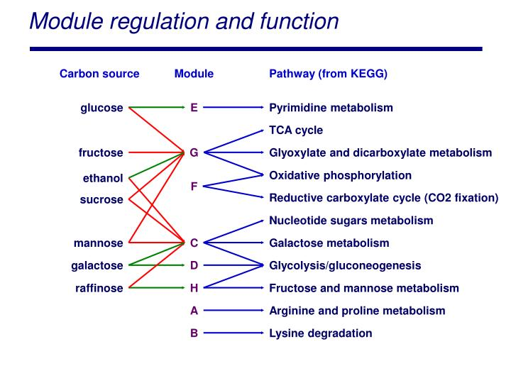 Module regulation and function