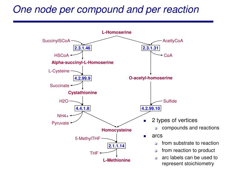 One node per compound and per reaction