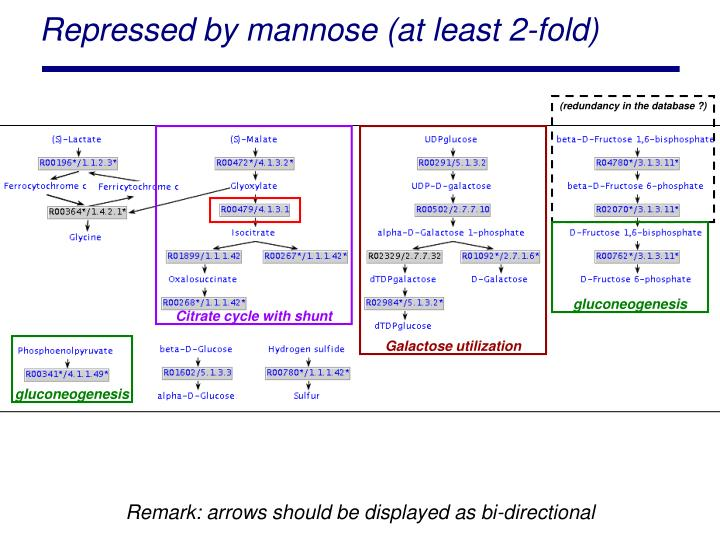 Repressed by mannose (at least 2-fold)