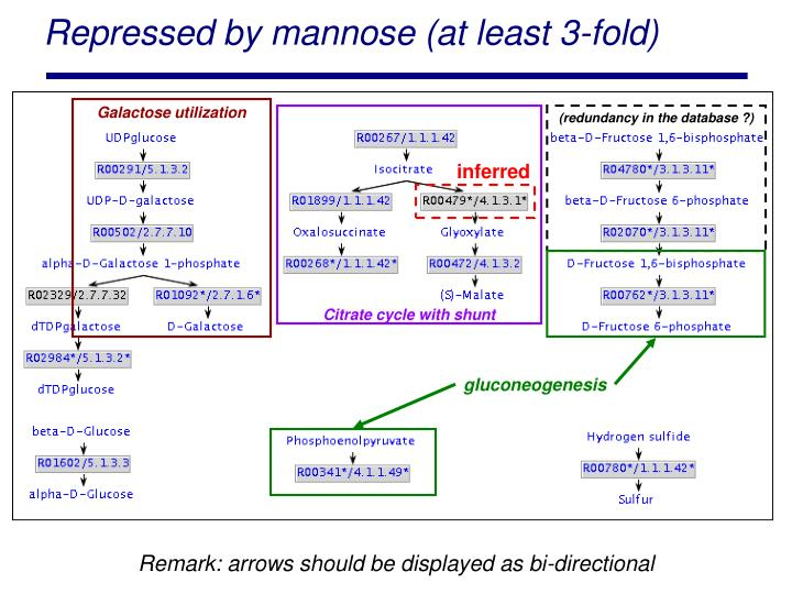 Repressed by mannose (at least 3-fold)