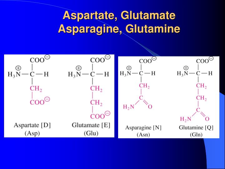 Aspartate, Glutamate