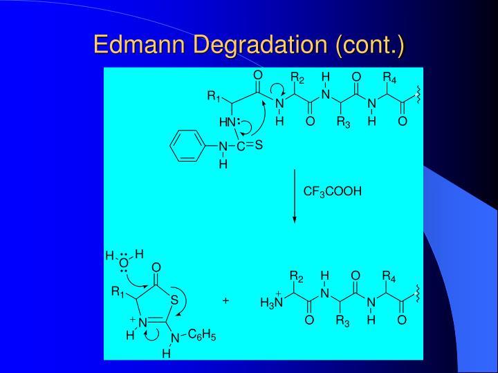 Edmann Degradation (cont.)
