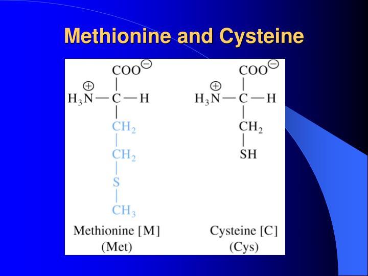 Methionine and Cysteine