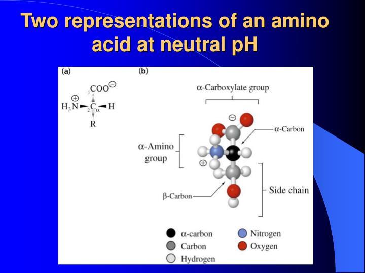 Two representations of an amino acid at neutral pH