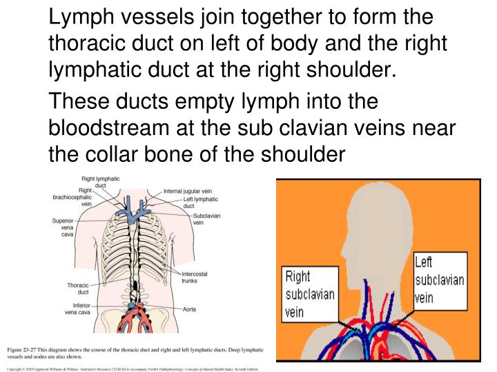 Lymph vessels join together to form the thoracic duct on left of body and the right lymphatic duct at the right shoulder.