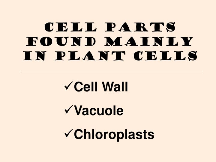 Cell Parts Found Mainly in Plant Cells
