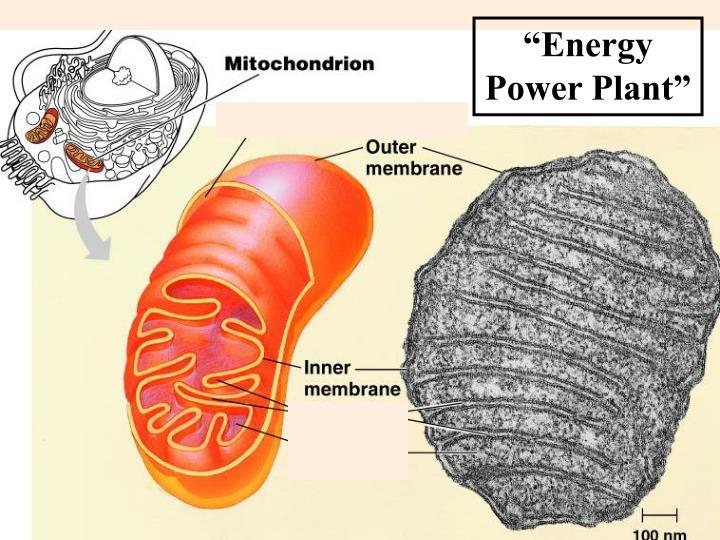 """Energy Power Plant"""