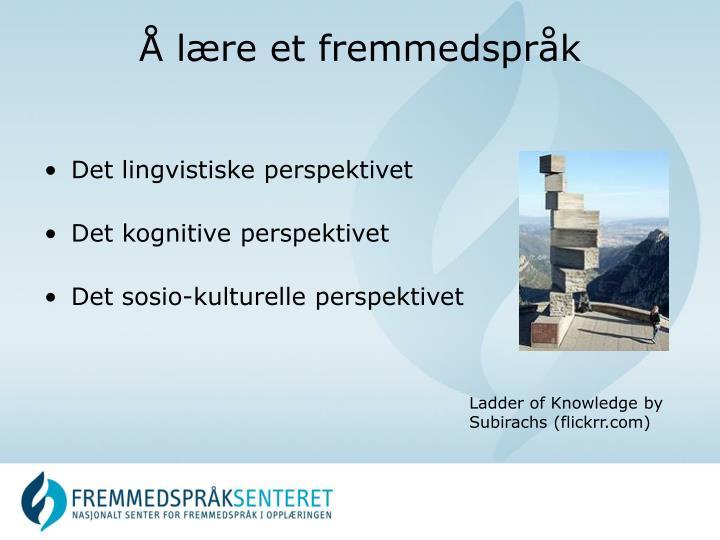 Det lingvistiske perspektivet