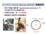 4 ti tumor inducing plasmid