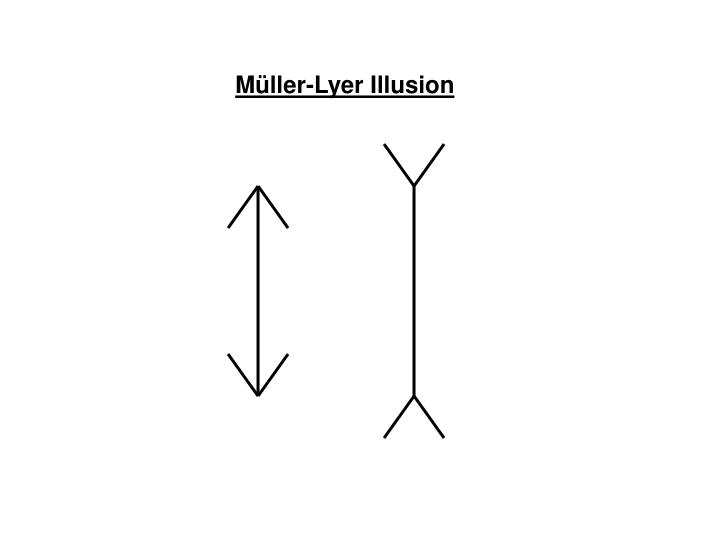 Müller-Lyer Illusion