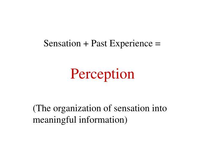 Sensation + Past Experience =