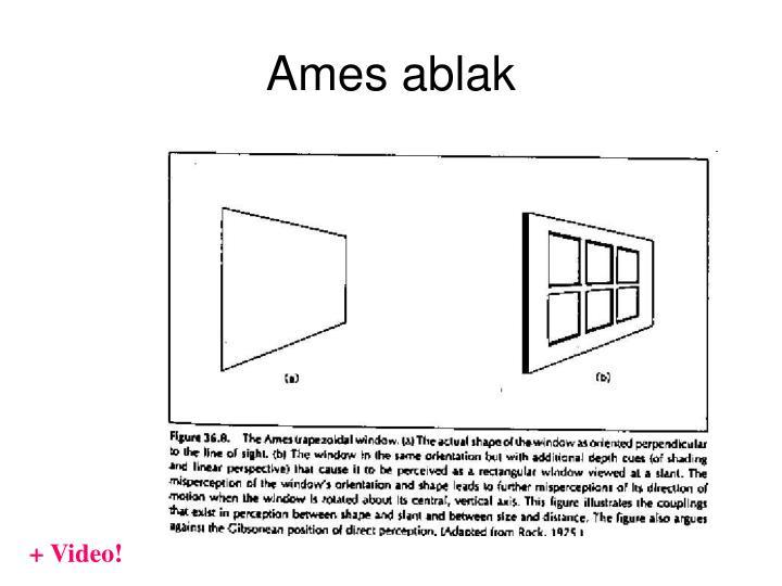 Ames ablak