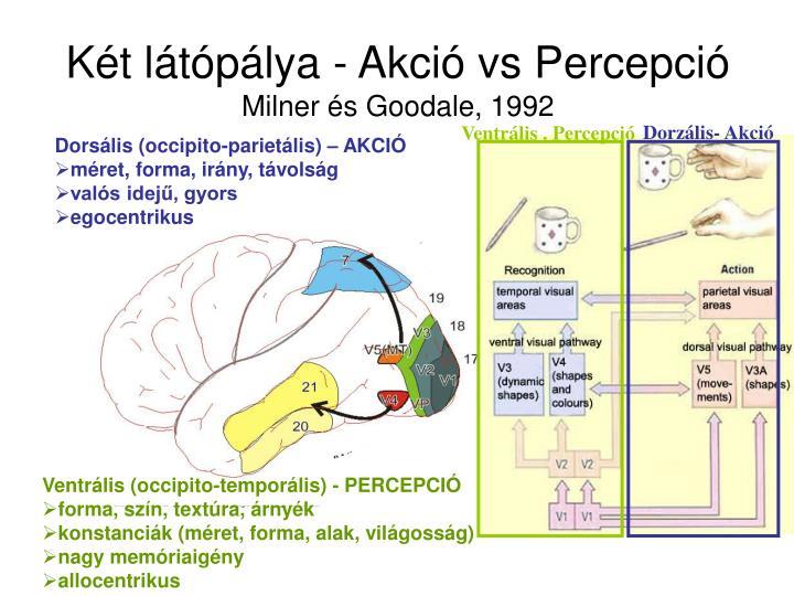 Két látópálya - Akció vs Percepció